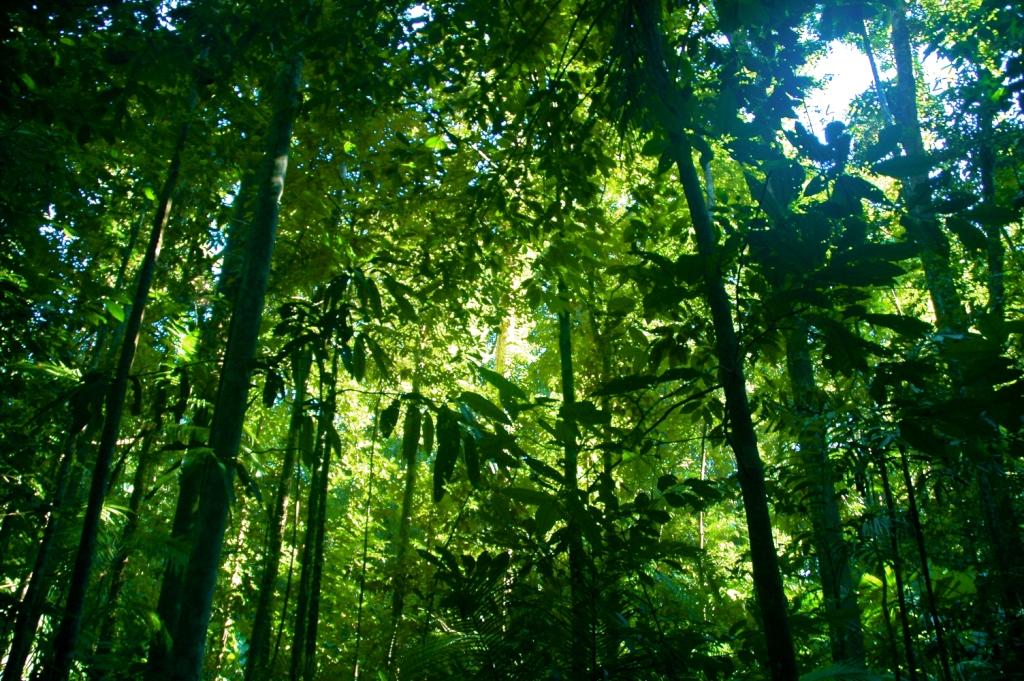 Foresta pluviale Daintree in Australia