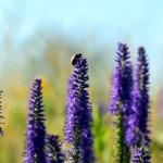 Purple flowers, violet