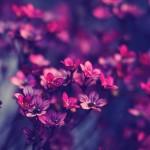 Purple flowers february