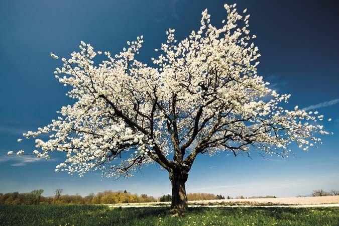 Fiori bianchi 03 fito for Albero con fiori blu