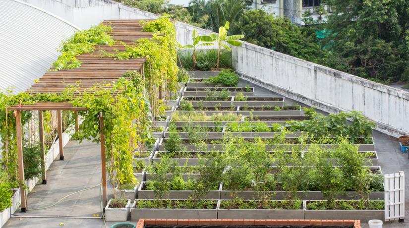 Community garden curare un giardino insieme dove anche - Giardino sul tetto ...