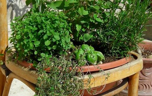 Terrazzo fiorito e piante commestibili – parte prima  Fito