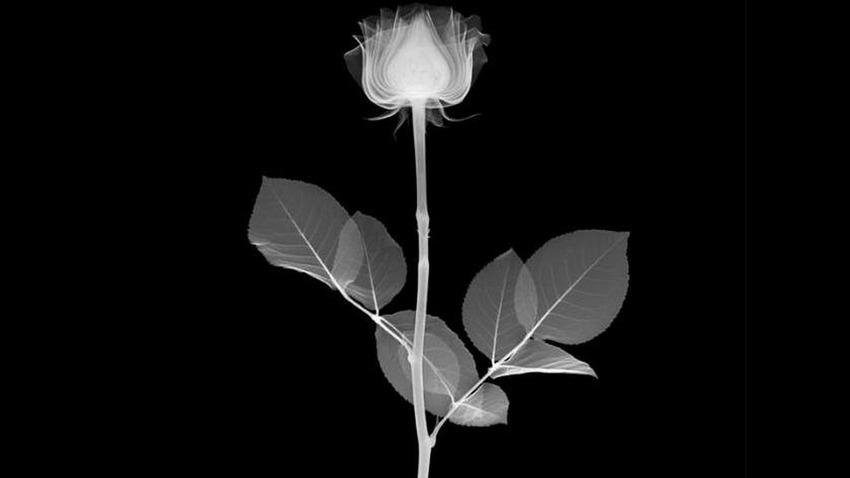 veasey-flower
