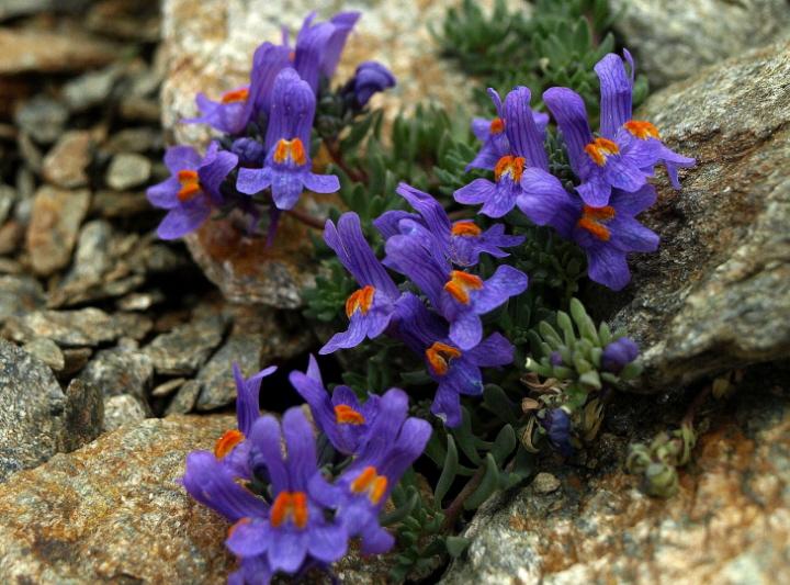 L\u0026#39;isola di Santorini (Grecia) e il mito di Atlantide - YouTube