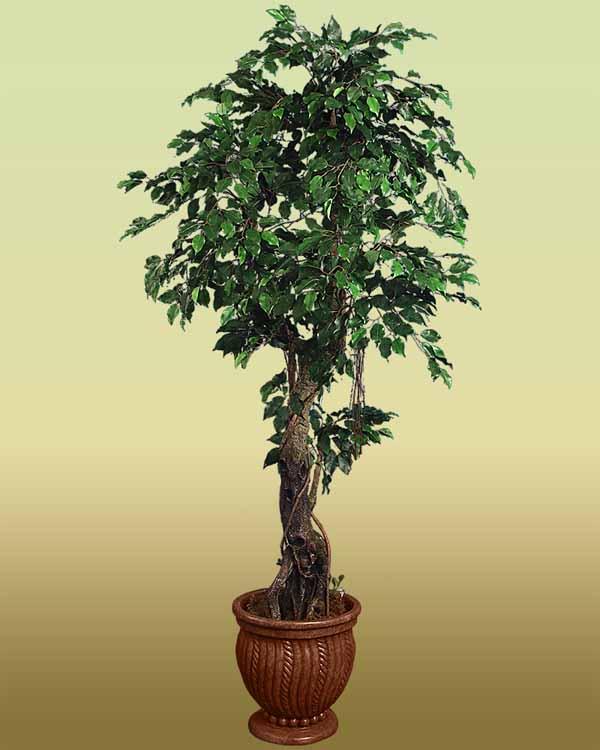 Le 15 piante da interno super resistenti seconda parte fito - Alberi da interno ...
