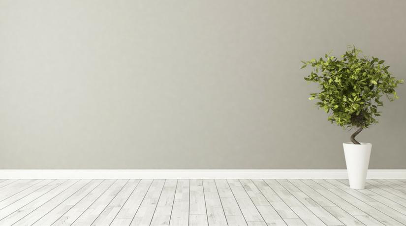 15 Piante Da Appartamento.Le 15 Piante Da Interno Super Resistenti Prima Parte Fito