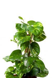 Le 15 piante da interno super resistenti prima parte fito for Piante di case