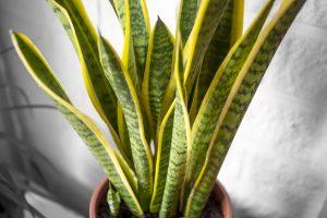 Pianta Ufficio Poca Luce : Piante interno poca luce simple quattro piante che depurano