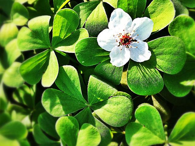 Le 15 piante da interno super resistenti terza parte fito - Piante da interno resistenti ...