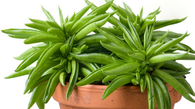 Le 15 piante da interno super-resistenti! Terza parte - Fito