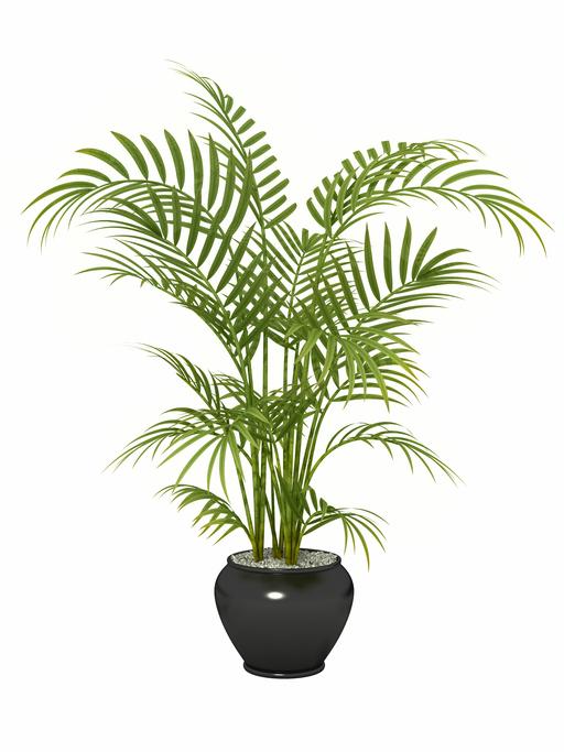 Le 15 piante da interno super-resistenti! Terza parte | Fito
