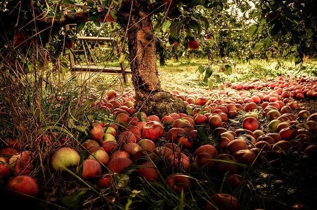 I lavori di ottobre in casa in giardino nell 39 orto e nel for Rinfoltire il prato