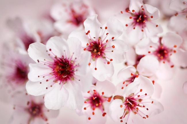 Amato Wedding Time! 8 fiori per il lancio del bouquet di settembre | Fito VP21