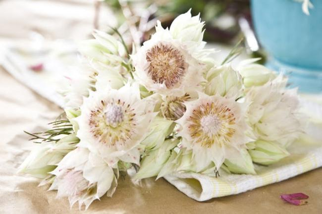 wedding-flower-feature-powerful-proteas-319-int