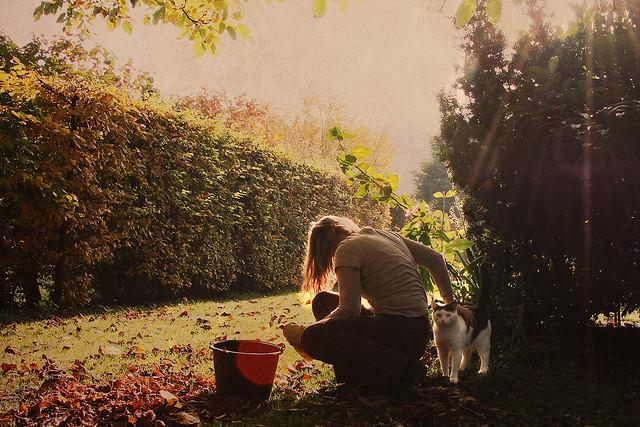 I lavori in giardino e nell'orto a ottobre