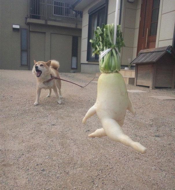 funny shaped vegetables fruits