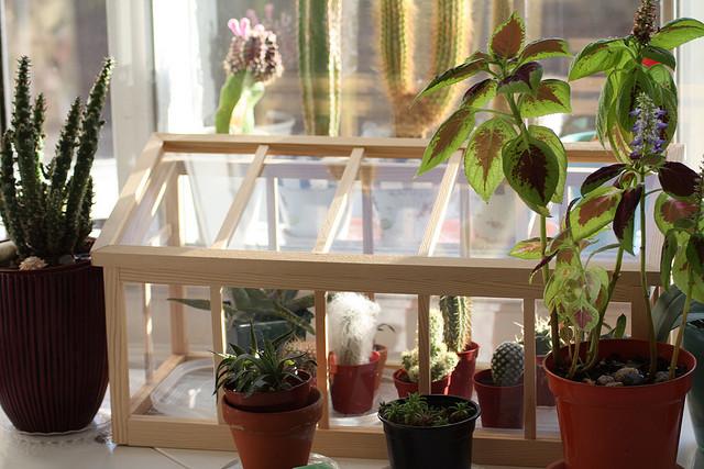 giusto in tempo per l 39 inverno consigli antigelo per il giardino fito. Black Bedroom Furniture Sets. Home Design Ideas