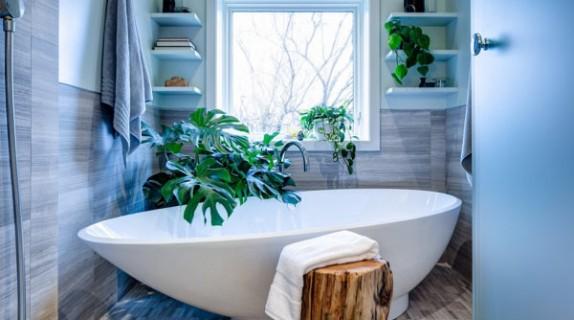 5 consigli per rigogliose piante da bagno fito - Piante da bagno ...