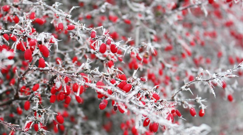 Fiori per colorare il vostro balcone d inverno fito