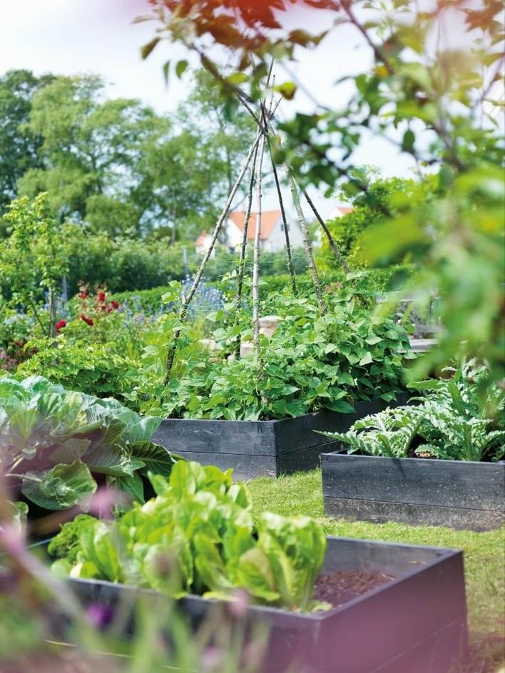 Garden design orto