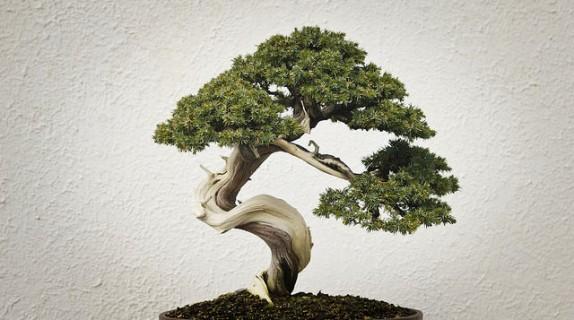 Come curare i bonsai d inverno fito - Cura dei bonsai in casa ...