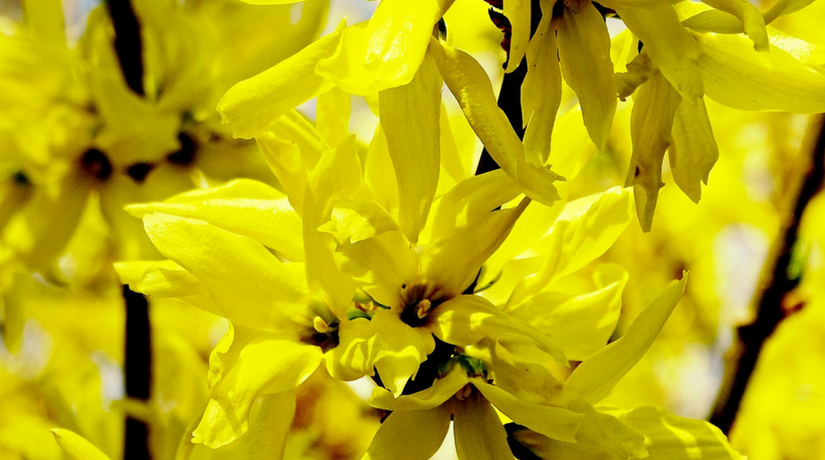 15 splendidi fiori di marzo fito for Fiori che sbocciano