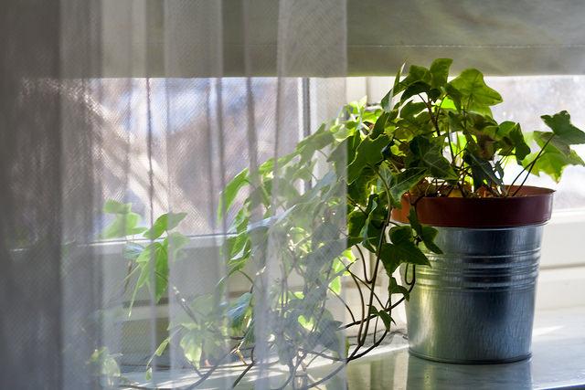 Illuminazione piante