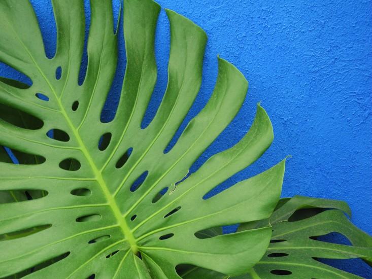 Fotografia di Jeanne Rostaing per Gardenista