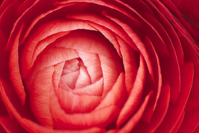 fiori in bulbo