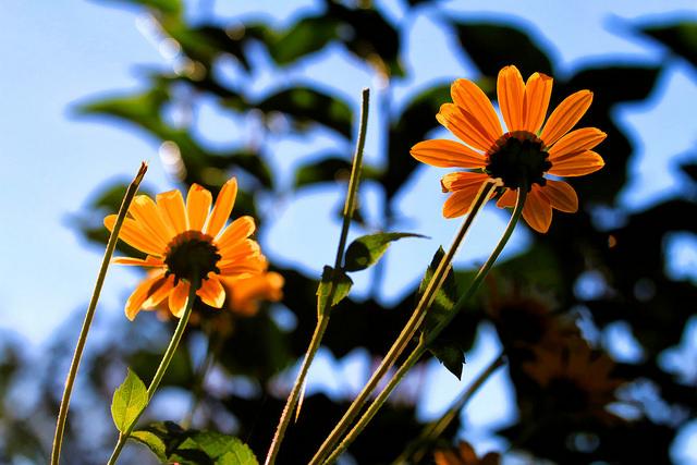 Fiori arancioni settembre