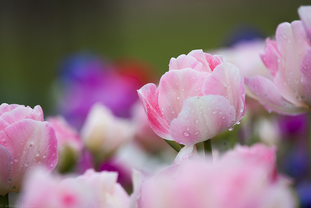 Foto di sakura_chihaya+/Flickr