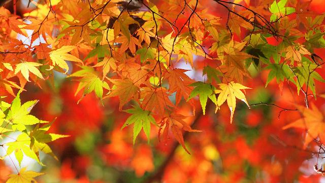 Albero con foglie rosse e gialle