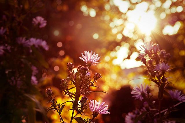Ottobre fiore tramonto