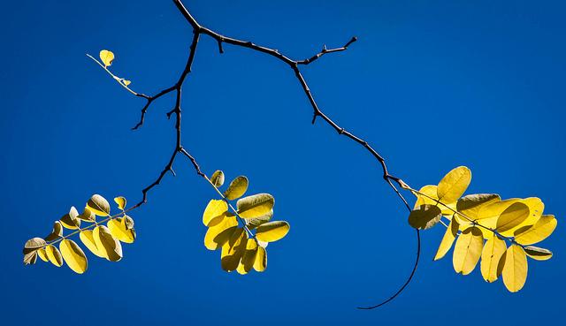 Foto di Geoff Marston/Flickr