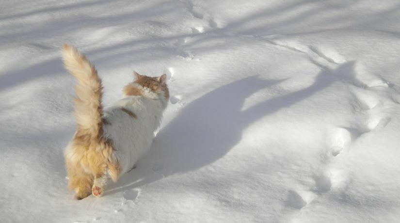 Il gatto d 39 inverno di gianni rodari fito for Il gatto inverno