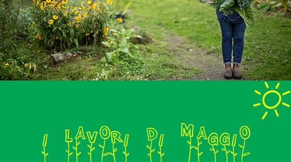 Calendario dei lavori di maggio nell'orto, in giardino, in terrazzo