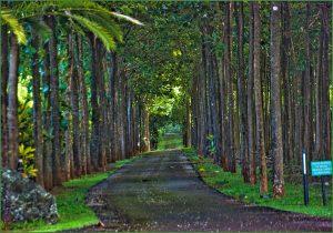 Na ʻĀina Kai Botanical Gardens, Kauai