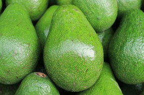 Il giardiniere consiglia fito for Pianta di avocado