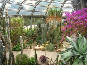 Botanischer Garten, Berlino (Germania)