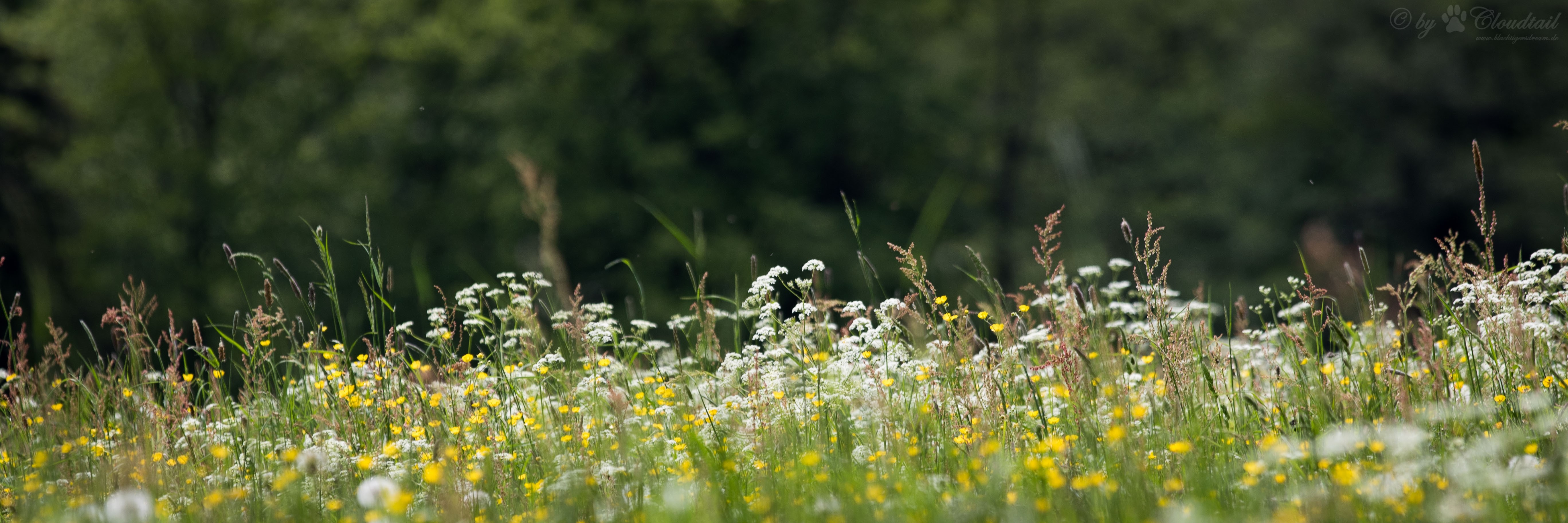 Meadow garden, prateria in giardino