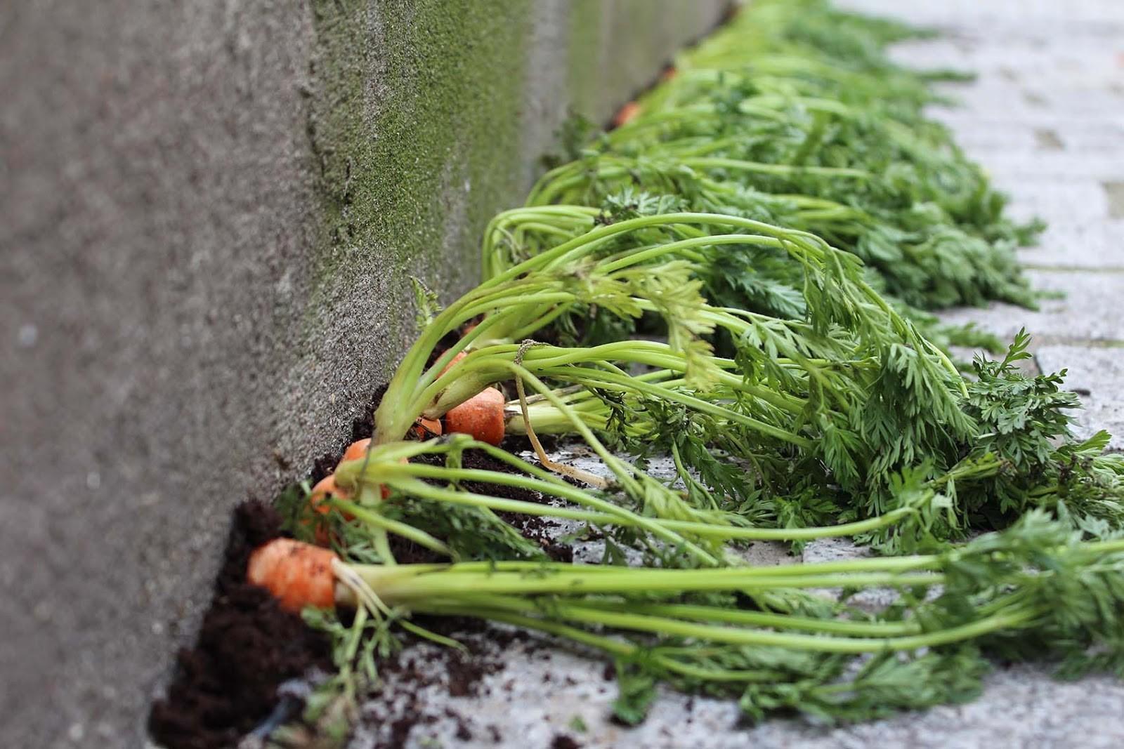 Installazione artistica con carote