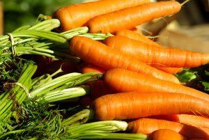 La raccolta delle carote a settembre