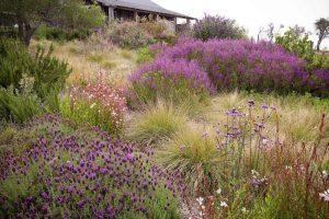 Prateria in giardino. Il meadow garden pieno di colori