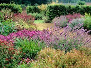 Una prateria bellissima. Meadow garden