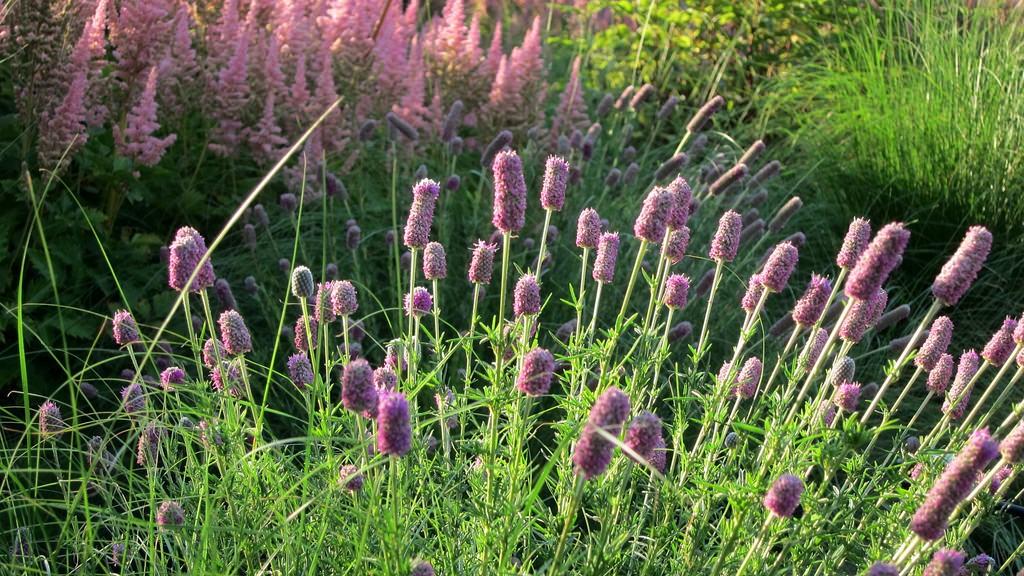 Meadow garden trasforma il tuo giardino in una prateria for Trasforma un semplice terreno in un colorato giardino