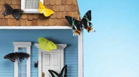 Costruisci una casa per gli insetti utili fito - Costruisci casa ...