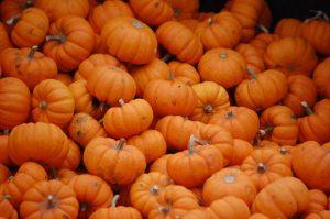 insieme di zucche, l'ortaggio ideale per ottobre