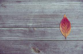 Il calendario dei lavori di ottobre in giardino