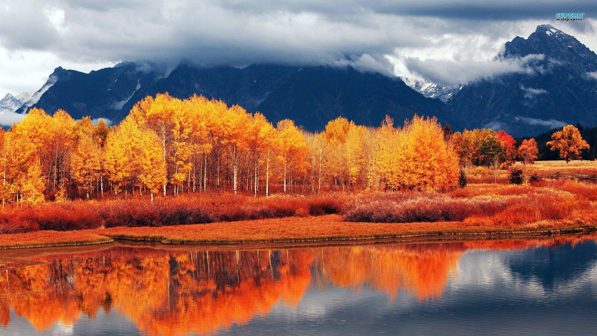 moose fall desktop wallpaper - photo #19