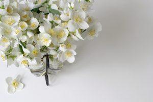 Piante da interno, piante da camera da letto: Gelsomino